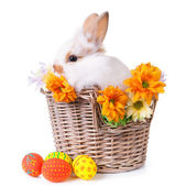 Cute white bunny sitting in a basket with flowers and colorful — Stock Photo