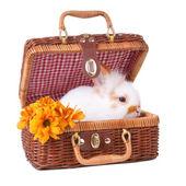 Small white bunny sitting inside of picnic basket — Stock Photo
