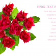 Top view of  red roses bouquet isolated on white background.  — Stock Photo