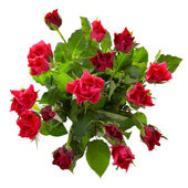 Top view of red roses bouquet — Stock Photo
