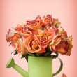 A bouquet of vintage roses in green watering can on pink backgro — Stock Photo