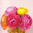 Colorful ranunculus flower in a yellow vase on vintage backgroun — Stock Photo