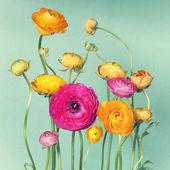 Flower arrangement of ranunculuson — Stock Photo