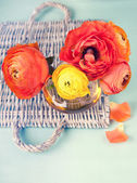 Ranunculus flower on a wicker tray on vintage background — Stock Photo