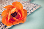 Orange ranunculus flower on a wicker tray on vintage background — Stock Photo