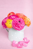 Beautiful colorful ranunculus flowers in watering cam on pink b — Stock Photo