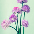 Bunch of chives on light green vintage background — Stock Photo