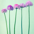 Chives with flowers on light green vintage background — Stock Photo