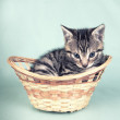 Cute kitten in a basket — Stock Photo