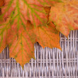 An orange bunch of autumn leaves on wicker background — Stock Photo