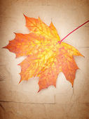 Colorful autumn leaf on old vintage paper — Stock Photo