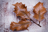 Old dry up holly leaves on wooden vintage background — Stock Photo
