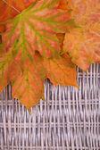 Um monte de laranja de outono folhas em fundo de vime — Fotografia Stock