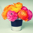 Beautiful colorful ranunculus flowers in a labeled bucket, spac — Stock Photo
