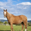 Bay horse, 9 years old, outdoors in the rays of the sunset — Stock Photo