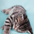 Stock Photo: Cute kitten sleeping peacefully