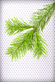 Branchlet of christmas tree in the corner on polka dot backgroun — Stock Photo