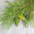 Christmas tree branches with green pine cones — Stock fotografie