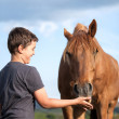 A happy child feeding a hungry brown horse — Stock Photo #49337935