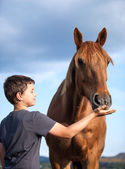 A happy child feeding a hungry and honorable horse — Stock Photo