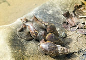 Group of snails on the rock — Foto de Stock