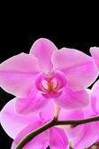 A bela orquídea — Foto Stock