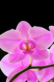 La bellissima orchidea — Foto Stock