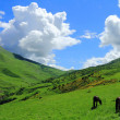 Caucasus green mountains — Stock Photo