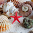 Foto Stock: Image of seashells and starfish