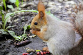 Eating squirrel on tree in park — Stock Photo