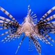 Aquarium fish — Stock Photo #37277721