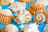 Seashells — Stockfoto