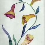 Beauty flower, watercolor illustration — Stock Photo