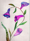 Beauty flower, watercolor illustration — Stock Photo