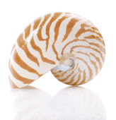 Nautilus pompilius sea shell, isolated on white, shallow dof — Stock Photo