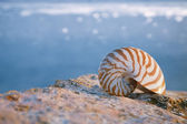 Nautilus seashell sand on sunrise and ocean — Stock Photo