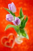 红色的郁金香春天的花朵闪光的背景 — 图库照片