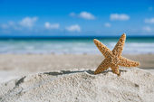 Starfish with ocean , beach and seascape — Zdjęcie stockowe