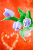 Tulip Spring flower on red and glitter — Stock Photo