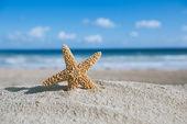 海、ビーチ、海の景色とヒトデ — ストック写真