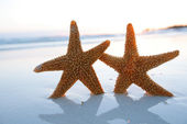 Sea star starfish Silhouette on sunrise beach, shallow dof — Stock Photo