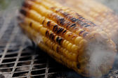 Roasted sweet corns on the bbq grill — Stock Photo