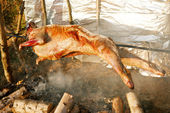 Lamb on the spit over open fire — Stock Photo