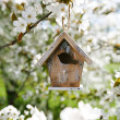 Little Birdhouse in Spring with blossom cherry flower sakura - Stok fotoğraf