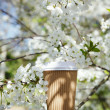Coffee in paper cup in Spring with blossom cherry flower sakura — Stock Photo