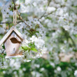 Little Birdhouse in Spring with blossom cherry flower sakura — Stock Photo