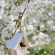 Little Birdhouse in Spring with blossom cherry flower sakura -  