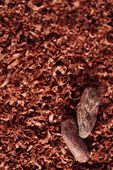Cocoa beans and grated chocolate background, super macro — Stock Photo