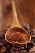 Cocoa powder in spoon on roasted cocoa chocolate beans backgrou — Stock Photo