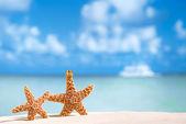 与大海、 沙滩和海景海星 — 图库照片
